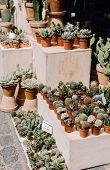 Cactus And Succulent Plants For Sale At A Market In Copenhagen, Denmark poster