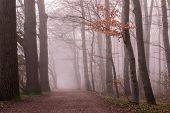 Thick Elegant Forest With Fog Fantasy Landscape poster