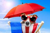 image of sunbathers  - Dog sunbathing on a wood deck chair - JPG