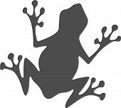 Frog Icon On White Background Wild, Wildlife, Zoo, Zoology poster