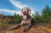 Happy Brown Dog Lying In Nature. Sunny Day poster
