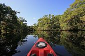 Summer Kayaking In Fisheating Creek, Florida Amidst Cypress Trees Reflected In Calm Water Under Clea poster