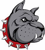 picture of bull head  - vector image of head of bull dog team mascot isolated on white background - JPG