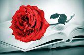 Постер, плакат: Сент Джордж день красная роза и некоторых книг каталонской традицией на день розы 23 апреля