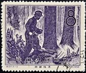 A stamp printed in China dedicated to Forestry shows Cutting with chainsaw
