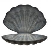 Large Sea Shell
