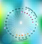 picture of ovulation  - Menstrual cycle wheel - JPG