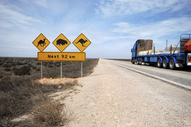 image of wombat  - Road train on the Eyre Highway Nullarbor Plain including iconic sign look out for camels kangaroos wombats - JPG