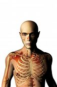 man with skeleton seen through, anatomy and medicine concept