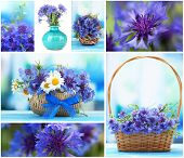 Collage of cornflowers closeup