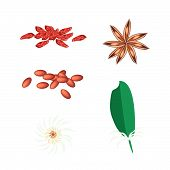 Постер, плакат: A Set Of Star Anise On White Background