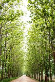 stock photo of tree lined street  - Tree line street in the nature background - JPG