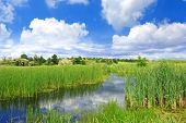 Summer scene on bog under blue sky with clouds