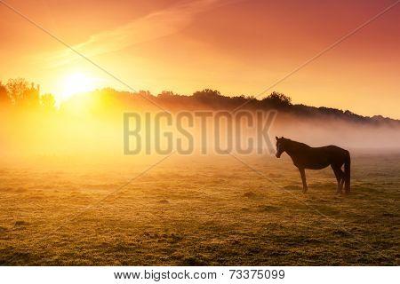 Arabian horses grazing on pasture