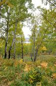 picture of siberia  - Autumn forest in the park  - JPG