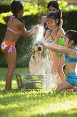 stock photo of pre-adolescents  - Group of Hispanic girls washing dog - JPG