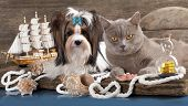 picture of seeing eye dog  - cat and dog - JPG