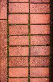 stock photo of pavestone  - Pavestone with the moss between the bricks - JPG