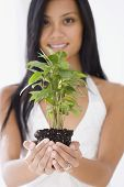 stock photo of pacific islander ethnicity  - Pacific Islander woman holding plant - JPG