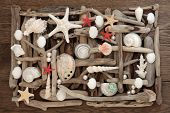 stock photo of driftwood  - Sea shell and driftwood abstract collage on oak wood background - JPG
