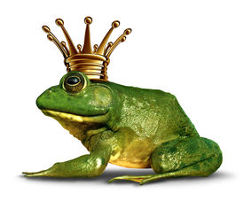 image of transformation  - Frog prince side view concept with gold crown representing the fairy tale symbol of change and transformation from an amphibian to royalty - JPG