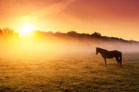 picture of farm landscape  - Arabian horses grazing on pasture at sundown in orange sunny beams - JPG