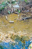image of water pollution  - Water pollution of a plastic bottles and a lot of garbage on the river surface