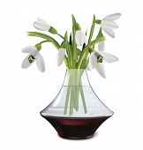Постер, плакат: Bouquet Of Snowdrops In A Vase