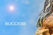 picture of craw  - metaphor of success with leg of turtle - JPG