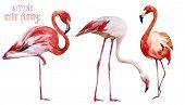 pic of flamingo  - Beautiful vector watercolor set with nice flamingos - JPG