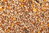 picture of sesame seed  - Background made of row healthy organic grain food mixed - JPG