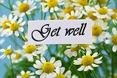picture of wishing-well  - Get well card with chamomile flowers - JPG