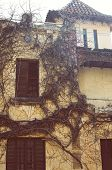pic of creeper  - Exterior facade of the old house with dry creepers - JPG