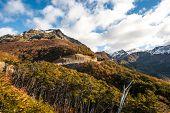 image of darwin  - Autumn in Patagonia - JPG