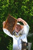 image of inspection  - Experienced senior apiarist making inspection in apiary in the springtime - JPG