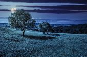 image of moon-flower  - few trees on agricultural meadow with flowers on hillside near forest at night in full moon light - JPG