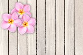 foto of frangipani  - Pink frangipani flower on grey wooden plank background and texture - JPG