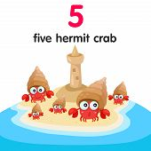 picture of hermit crab  - Illustrator of number five hermit crab for education - JPG