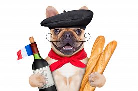 picture of beret  - french bulldog with red wine and baguette and french beret hat isolated on white background - JPG