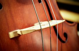 picture of cello  - Close up image of a Cello - JPG