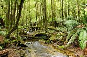 Stream flowing softly through lush rainforest.  Moss-covered boulders, fallen trees and treeferns ma