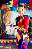 foto of parti poodle  - Wide smiling harlequin clown in hat is holding red poodle on his palm - JPG