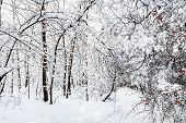 Snowy Footpath In Timiryazevskiy Forest Park Of Moscow City In Sunny Winter Morning poster