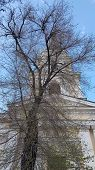 White Cathedral Chapel Behind Dark Branches Of Big Bare Tree. Classic Architecture Building With Blu poster