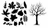 Autumn Leaves And Wood Black Silhouette. Set Of Autumn Leaves, Berries, Nuts And Tree Isolated. Blac poster