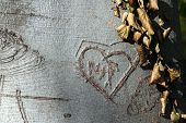 Love Signs In Tree Bark poster