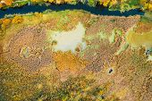 Aerial View Of Green Grass Landscape. Top View From High Attitude In Summer Evening. Marsh Bog. Dron poster