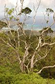 foto of ou  - View of interesting tree showing the Pacific Ocean in the distance - JPG