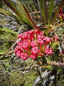 Plants And Flowers At Table Mountain National Park In Cape Town, South Africa. Beautiful Plants From poster