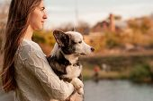 Smiling Woman Hugging Her Pet Welsh Corgi Dog. Welsh Corgi Dog Playing With A Woman Walking Outdoors poster